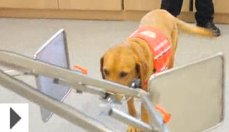 About us | Medical Detection Dogs