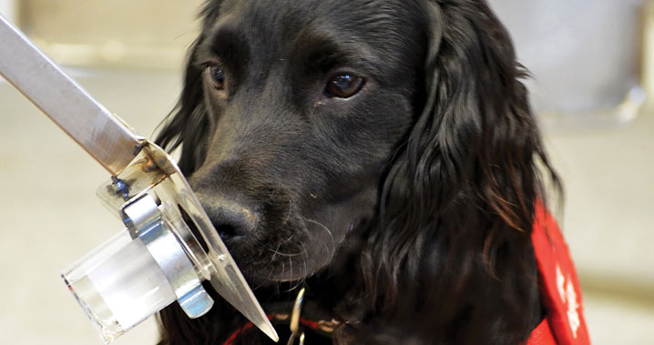Can Dogs Detect Cancer In Their Owners