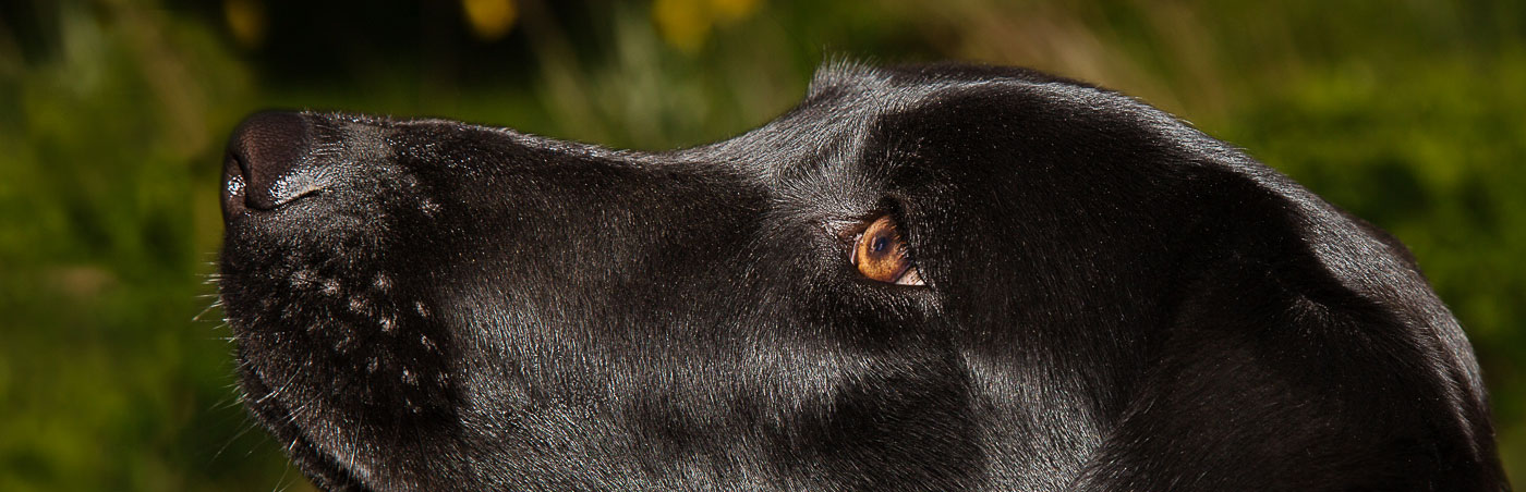 The Dog's Nose - Photography by Julia Cleaver