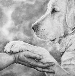 Charcoal & Pencil Artist Becky Gouverneur