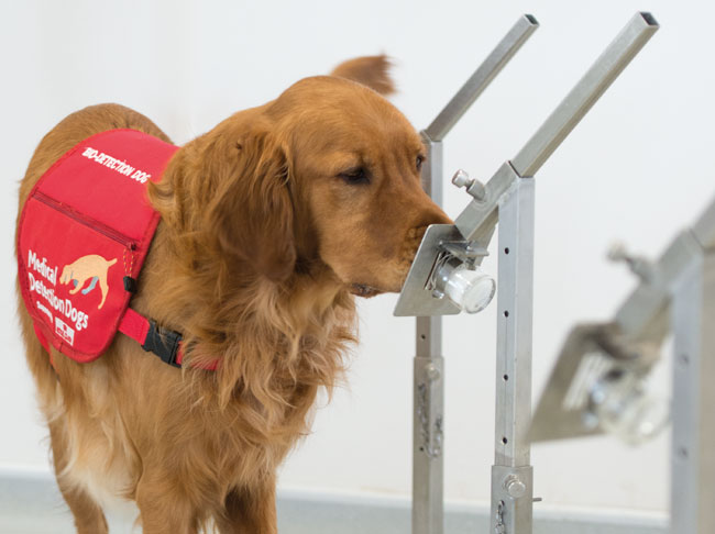 Bio Detection Dogs