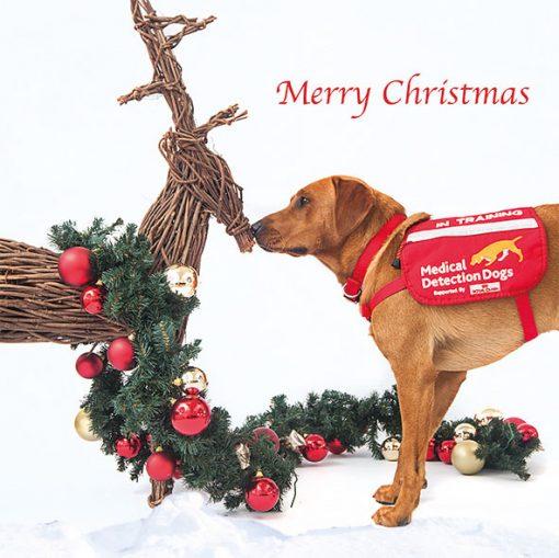 Making a new festive friend