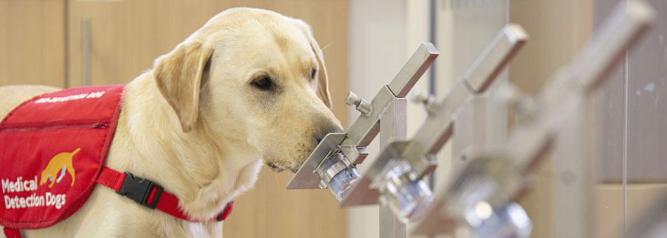 Bio Detection Dog Storm