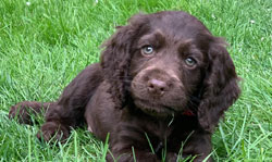 Sponsor a Puppy