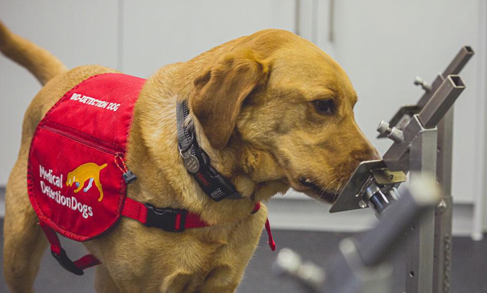Covid-19 Detection Dog Kyp