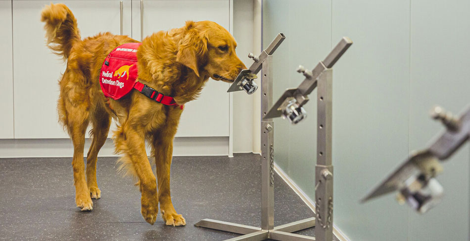 COVID-19 Detection Dog Millie